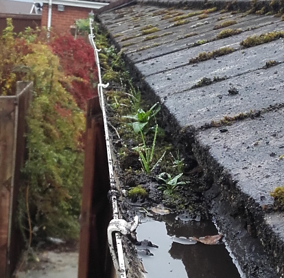 Gutter Cleaning in Ely